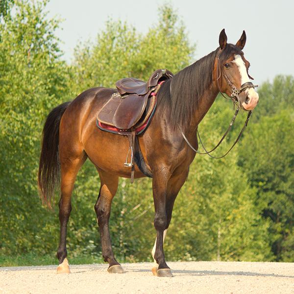 """Верховая езда, абонементы от 8 руб/занятие на конюшне """"Манул"""""""