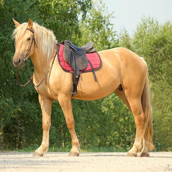 "Верховая езда от 10 руб/занятие на конюшне ""Манул"""